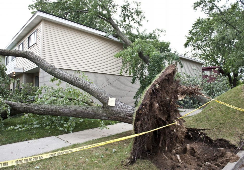 big tree fell on the ground and house