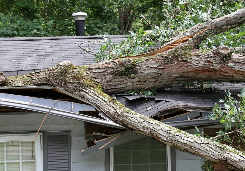 tree fell on a small house